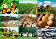 NIGERIAN AGRICULTURAL INSURANCE RECRUITMENT 2021 APPLY NOW